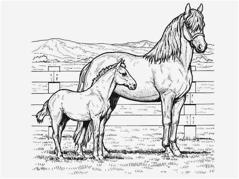 great horse coloring pages   coloring pages