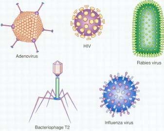 What Can a Trojan Virus Do