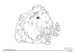 guinea pig worksheets