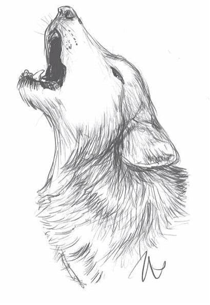 Lobos Lobo Dibujos Dibujo Wolf Dibujar Visitar