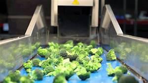 Broccoli, Floretting, Machine, Cutting, Machine, Decoring, Machine, Trimming, Machine