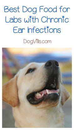 images   dog food  pinterest