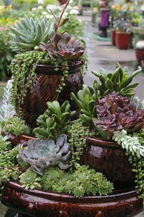 Stacked Cactus Garden Ideas Photograph   Gardens Ideas