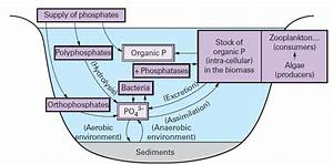 Phosphorus Cycle Simple Explanation  Science For Kids