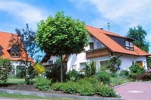 Baum Vorgarten Immergrün : einen hausbaum sollte man gut ausw hlen gawina ahorn ~ Michelbontemps.com Haus und Dekorationen