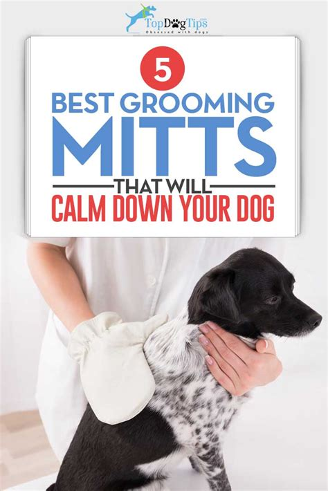 best grooming top 5 best grooming mitts and grooming gloves for dogs