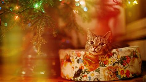 Cat, Lights, Christmas Wallpapers Hd / Desktop And Mobile Backgrounds