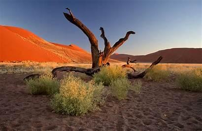 Desert Namib Sunset Tree Namibia Africa Trees