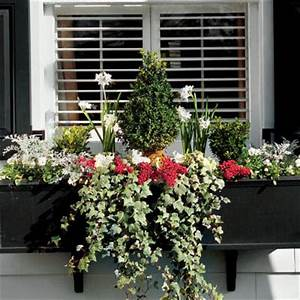 Cottage Flavor Window Boxes Abloom