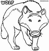 Wolf Coloring Pages Print sketch template