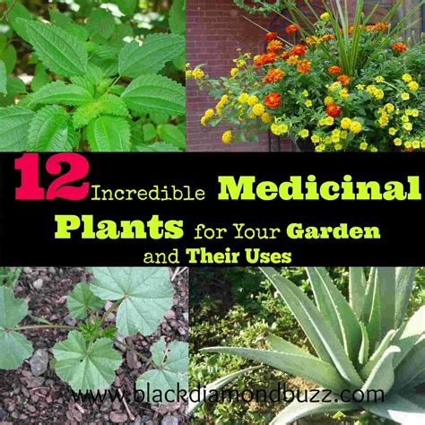 12 Incredible Medicinal Plants For Your Garden And Their Uses