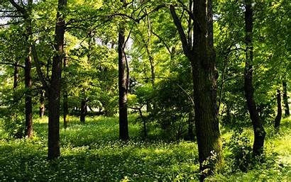 Trees Nature Plants Wallpapers 1440