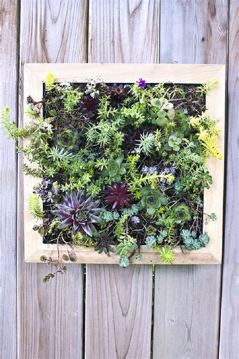top  diy outdoor succulent garden ideas top inspired