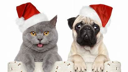 Christmas Dog Cat Dogs Cats Wallpapers Merry