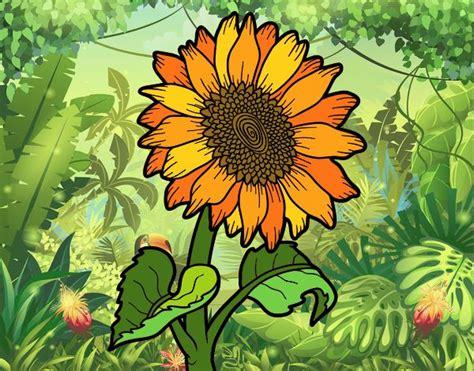 fiori girasole disegno fiore di girasole colorato da utente non