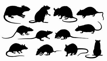 Rat Rats Silhouettes Vector Illustration Silhouette Mice
