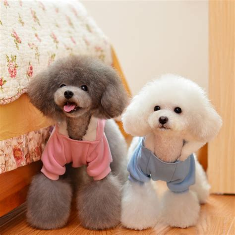 cute baby dogs  cats hvgj litle pups