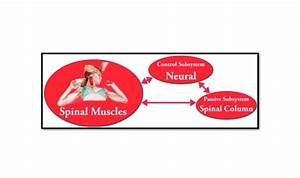 Manual Muscle Testing For Tension