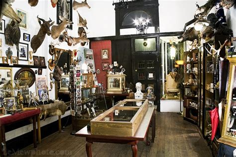 the shop of curiosities artistic ceramics in san gimignano 17 best images about i left my heart in san francisco on pinterest north beach san francisco
