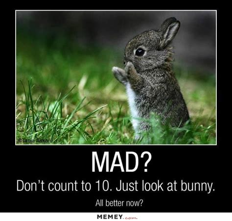 Angry Bunny Meme - cute memes funny cute pictures memey com