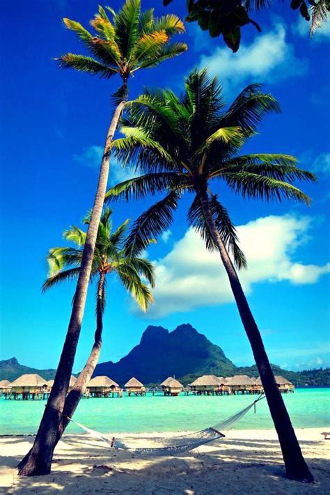 Great Picture With View On Mount Otemanu Bora Bora