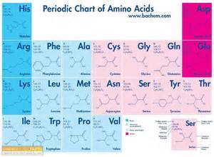 Amino Acid Periodic Table