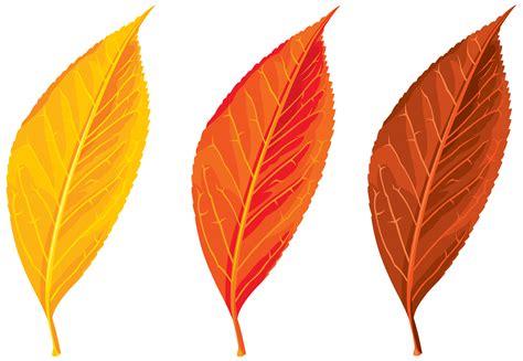 photo autumn leaves plant leaves leaf