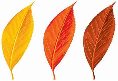 Leaves Leaf Autumn Clipart Fall Clip Seasons