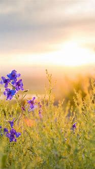 Download Our HD Wild Flowers Wallpaper For Android Phones ...