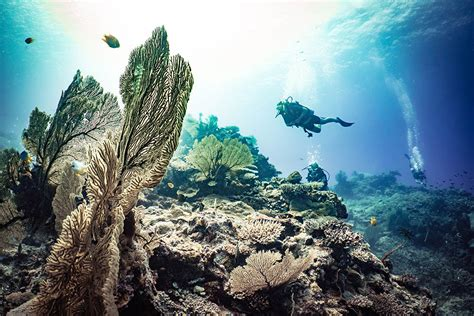 Dive Destinations by The Top 25 Dive Destinations In The World Dive Magazine