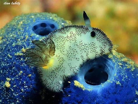 fluffy sea bunnies slugs  cute     cuddle