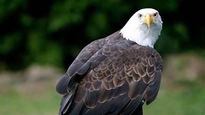 Birds Bird Exotic Wings Wild Animal Desktop