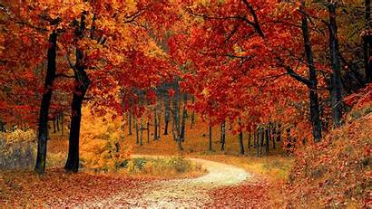 Forest Path Autumn Foliage Colorful Park Ultrawide