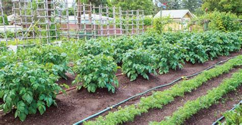 Choose The Best Garden Watering Systems Organic