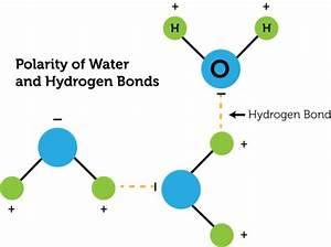 Hydrogen Bonding | CK-12 Foundation