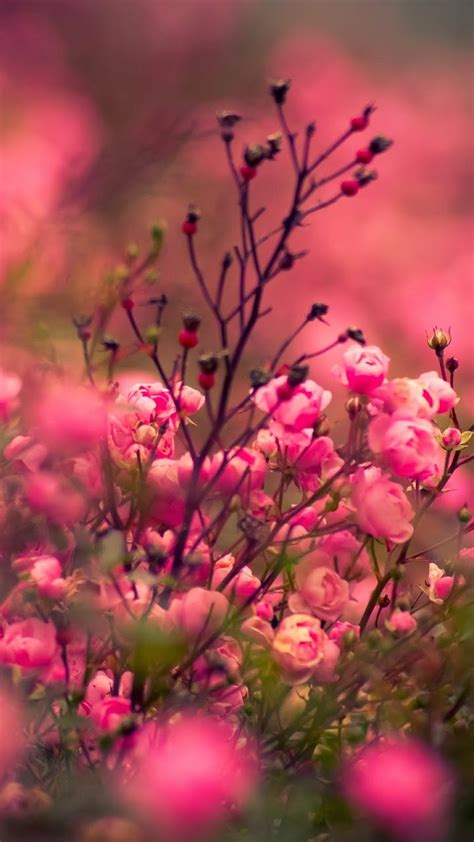 android wallpaper flowers gallery