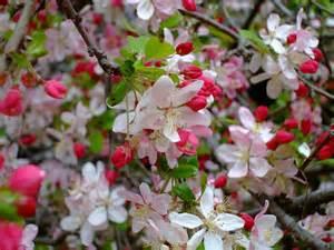 Fleurir Jardin En Avril by Quels Arbustes Fleurissent En Avril