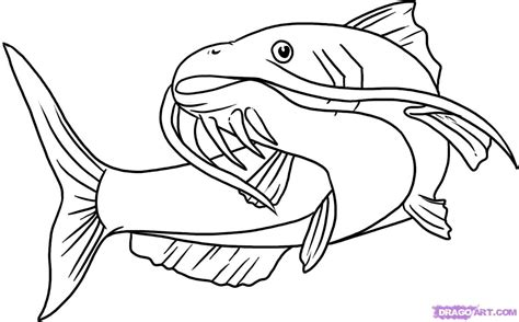 draw  catfish step  step fish animals
