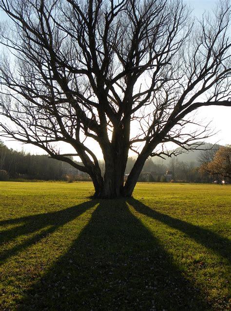 tree photo  susan koomar  national wildlife