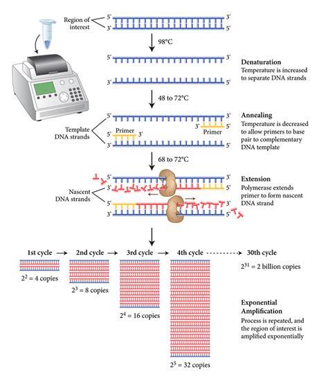 bureau de la pcr pcr synbiobrasil