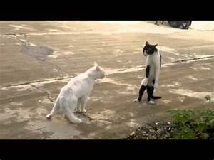 Stand up Cat on Two Legs - YouTube