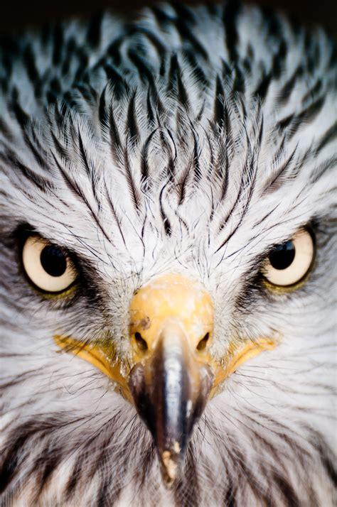 Birds Of Prey • Photography • Artificialflight