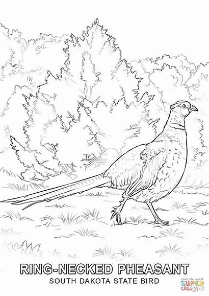 Dakota Coloring State South Bird Pages Drawing
