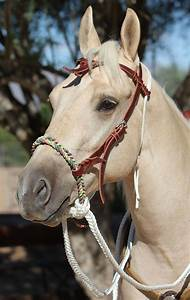 Improve your horse's feel on the trail or in the arena by ...
