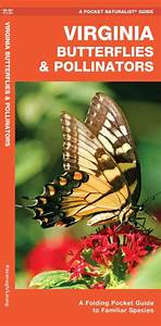Virginia Butterflies  U0026 Pollinators