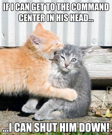 Cat Meme Images - 50 very hilarious cute cat memes golfian com