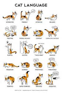 cat language what is your cat telling you onpets