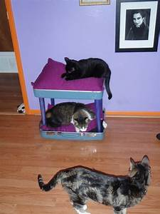 Reclaimed Suitcase  U0026 Chair Cat Bunkbed  U00b7 How To Make A Pet