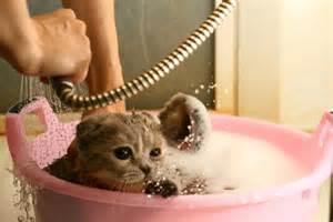 cat wash petanim 187 modo mantenimiento