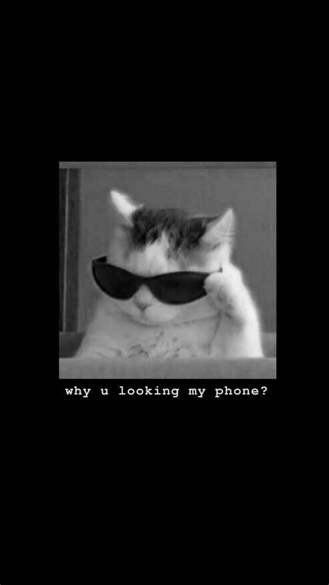 wallpaper cat wallpaper wallpaper iphone wallpaper